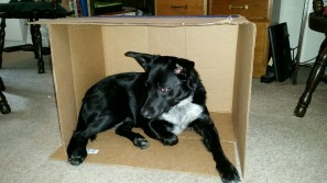 Bailey in a box.