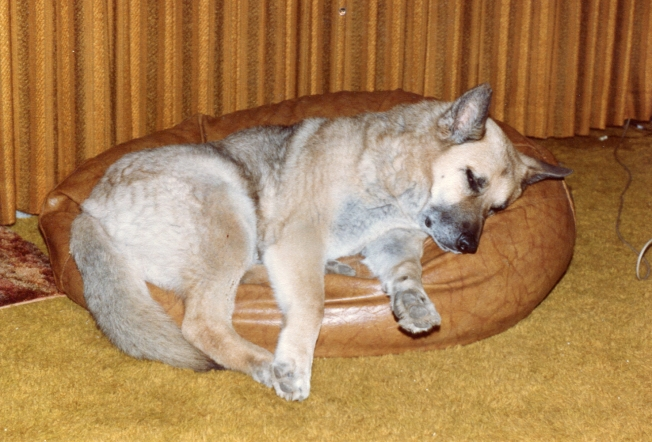 barney in bean cushion_001.JPG