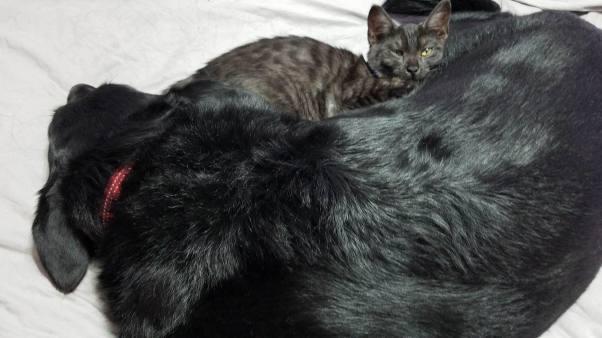 Bailey and-Savvyvvy sleeping101